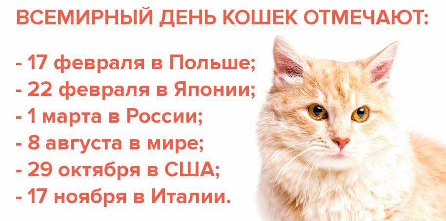 Какого числа отмечают день кошек? история и традиции праздника, интересные факты :: syl.ru