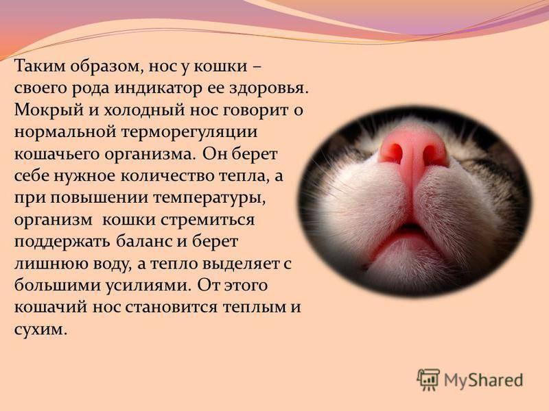 Кошка постоянно облизывается: основные причины кошка постоянно облизывается: основные причины