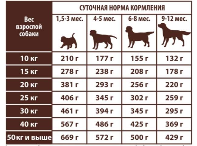 Как перевести щенка на сухой корм?