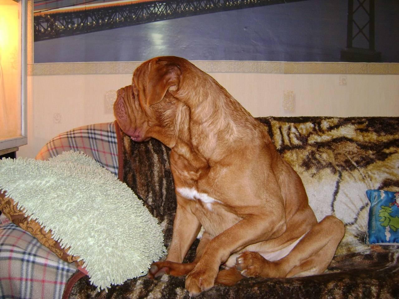 Почему собака плохо ест и вялая, как помочь животному?
