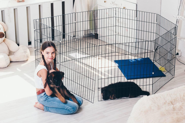 Клетка для собаки:  неволя или дом. как сделать жизнь в клетке счастливой.
