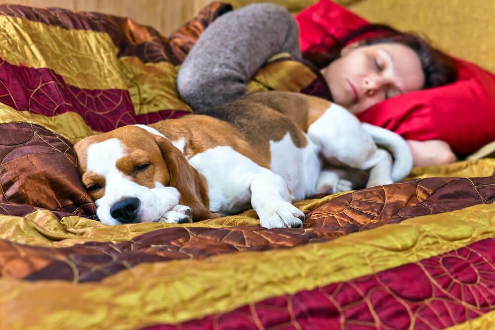 Как отучить собаку писать на кровать   dog-care - журнал про собак