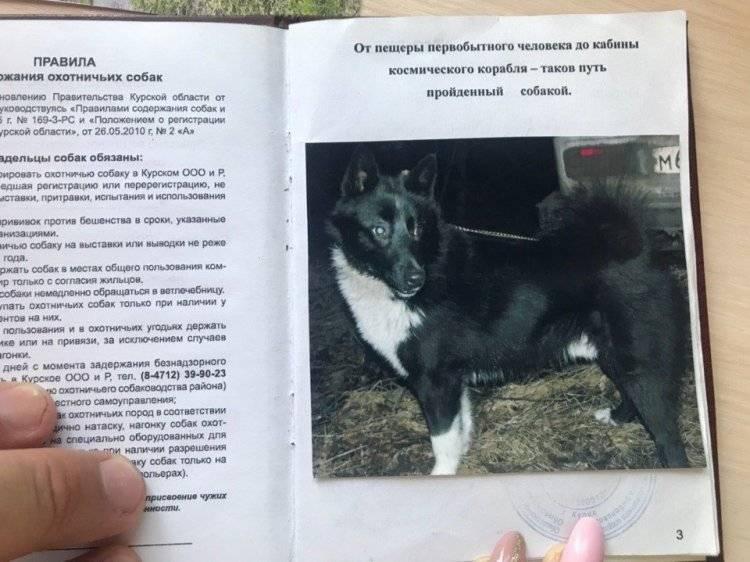 Чунцин - собака из китая: фото и стандарт породы, все об уходе