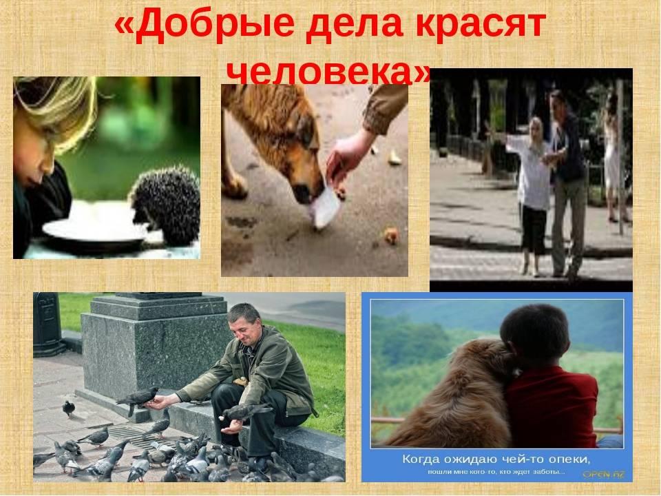 10 примеров героического спасения животными человека | fresher - лучшее из рунета за день