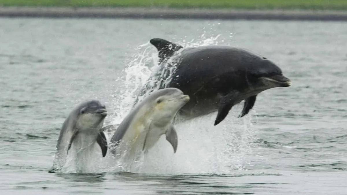 О чём говорят и почему умирают? ученый об интеллекте черноморских дельфинов