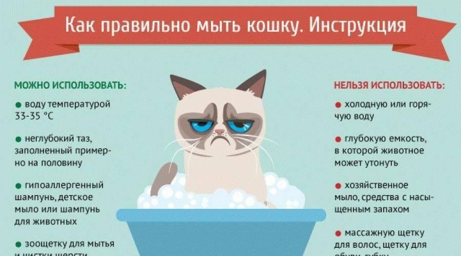 Как оставить дома котенка?