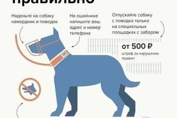Правила содержания собаки в квартире согласно закону и комфорту | рутвет - найдёт ответ!