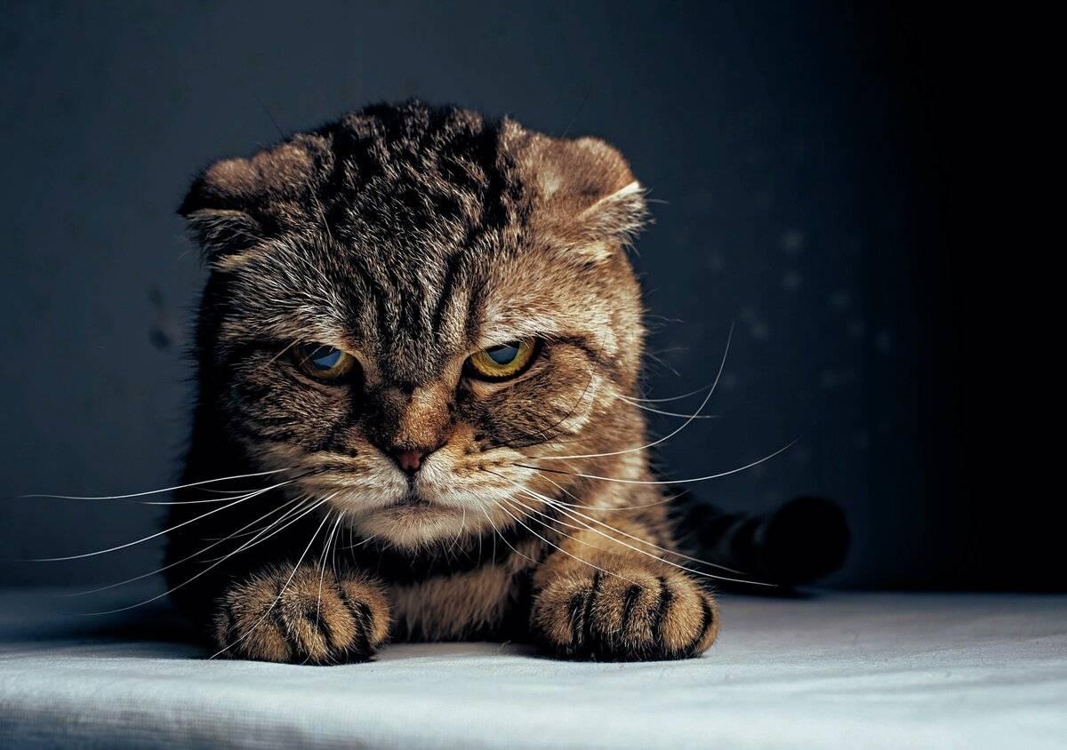 12 признаков того, что ваш кот любит вас — 4 лапки
