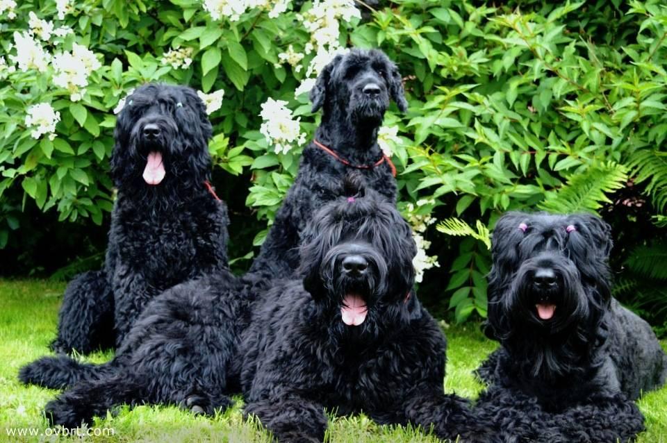 Самые лучшие породы собак россии