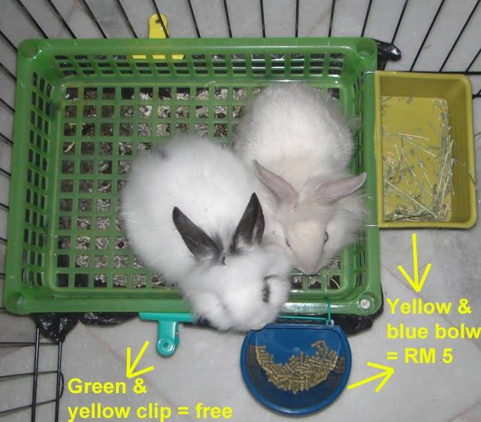 Приучение кролика к лотку | информационный портал о карликовых и декоративных кроликах