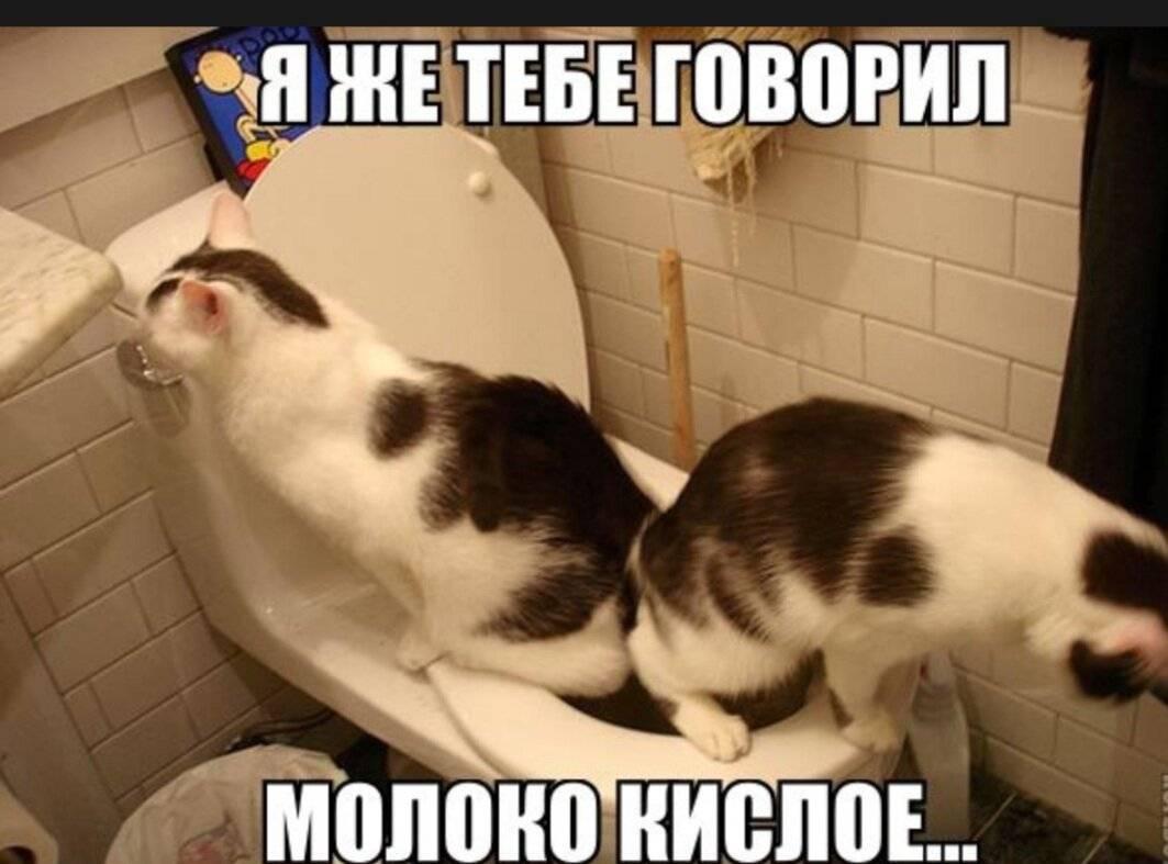 Почему кошка кусается когда ее гладишь?