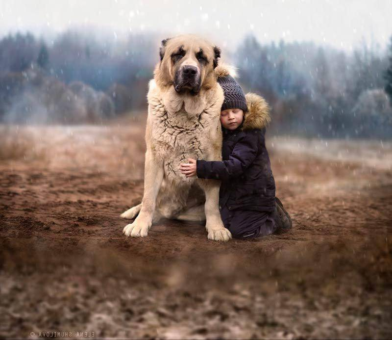 Породы собак для начинающего владельца