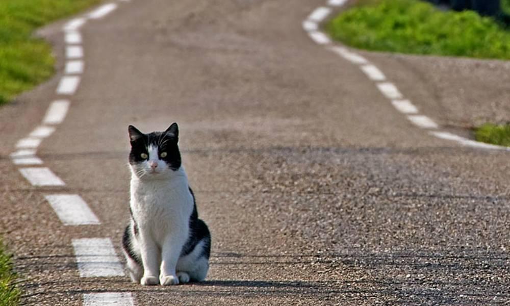 Что делать если потерялась кошка? 27 советов которые помогут