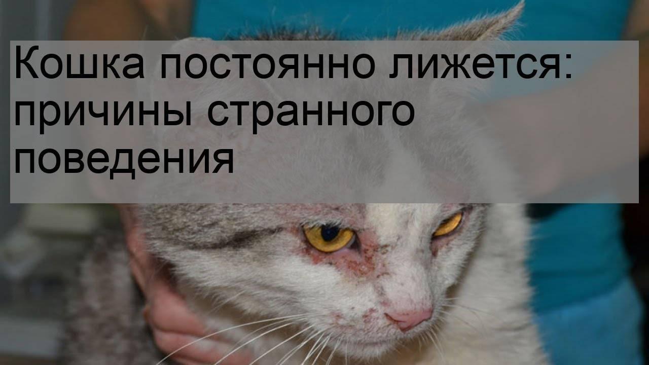 Круглосуточная ветеринарная клиника в подольске. почему у кота текут слюни изо рта - слюнотечение у кошек, причины