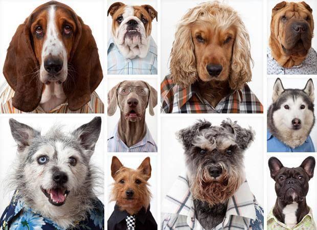 11 пород собак у которых выпадают глаза: что делать когда выпал глаз и лечение проптоза