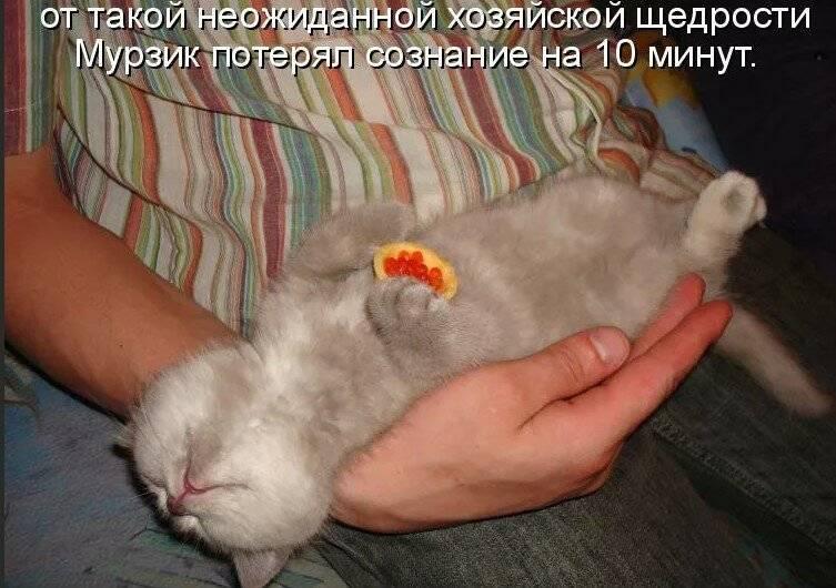 Лишай у кошек и собак - симптомы и лечение
