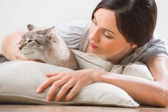 Новое место для питомца: как кошки переносят гостиницу для кошек