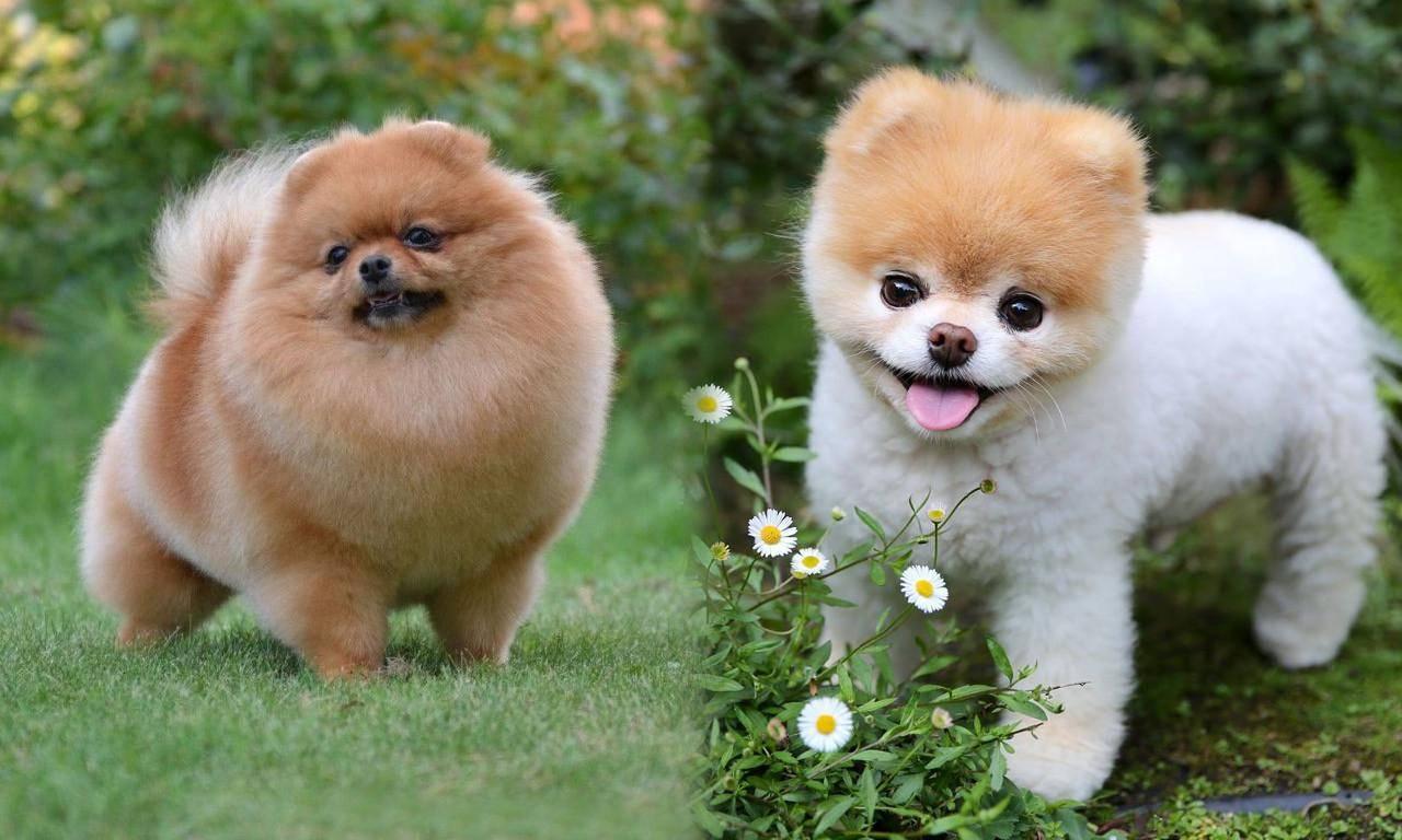 Самые милые породы собак в мире — топ-10