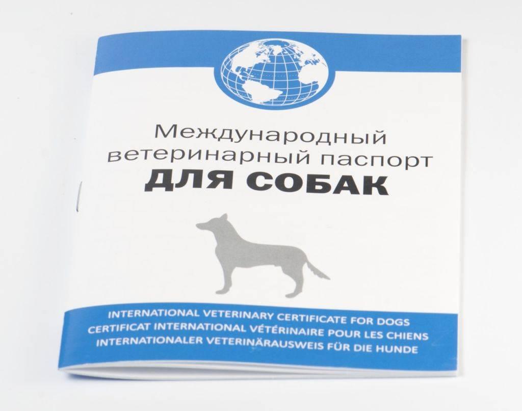 Как начать разводить кошек и стать успешным заводчиком, с чего начинать бизнес по разведению котят? - kotiko.ru