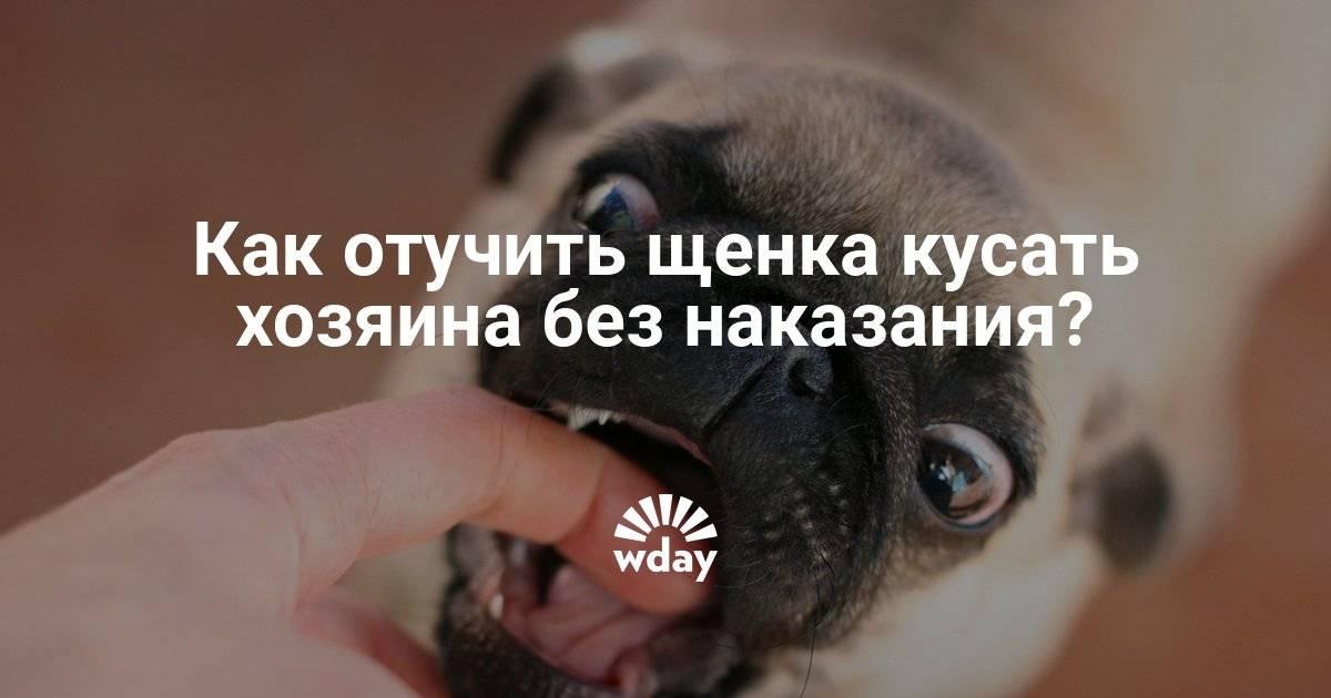 Что делать если собака рычит на хозяина