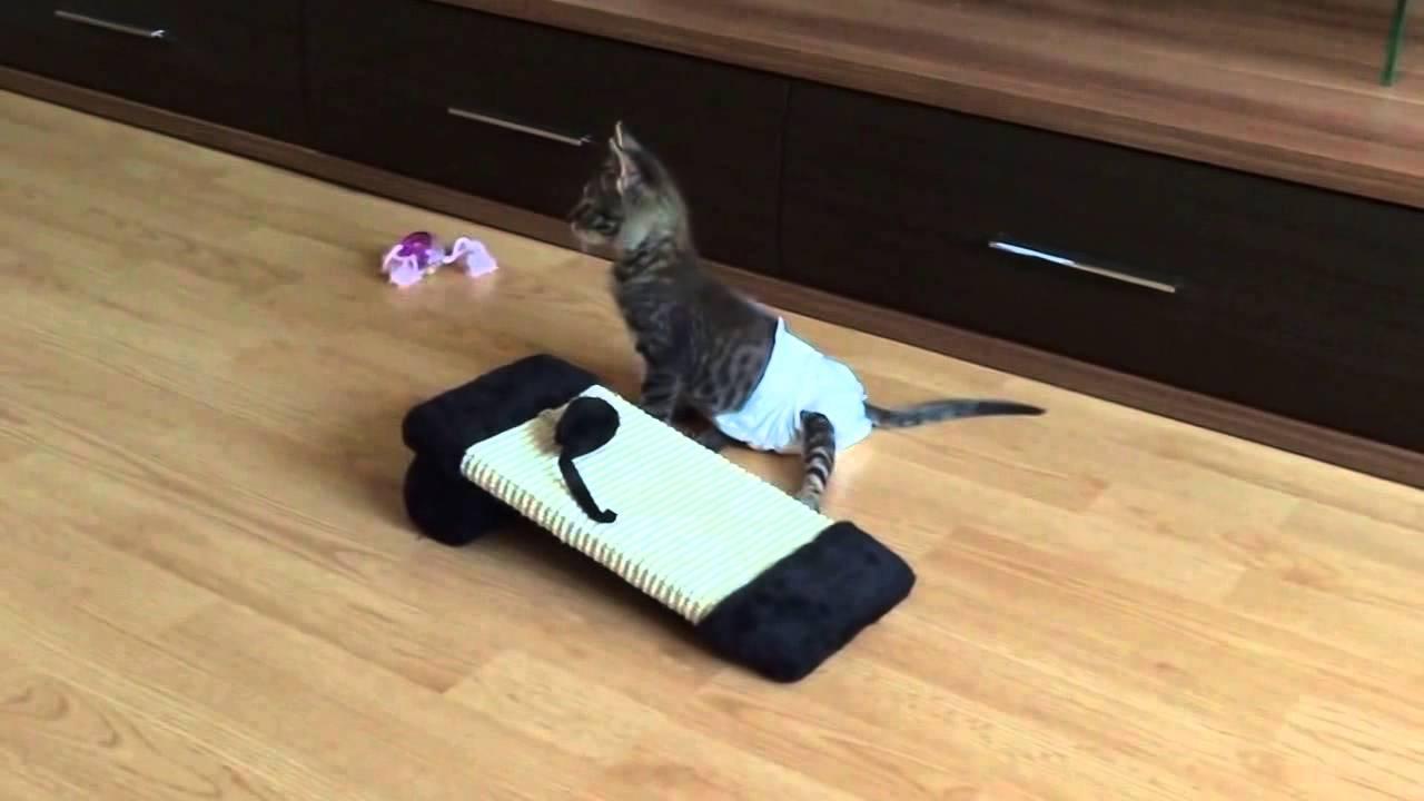 Памперс для кота: подгузник для кошек