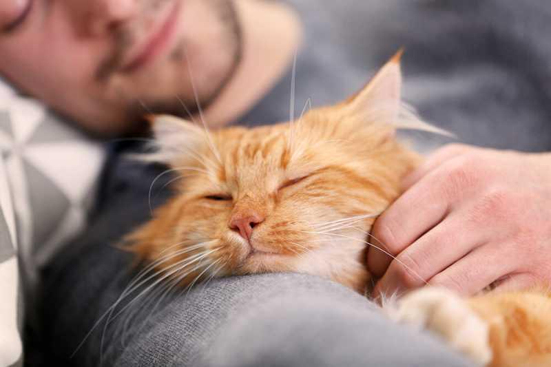 Почему кот ходит по пятам за хозяином? | про кошек | яндекс дзен