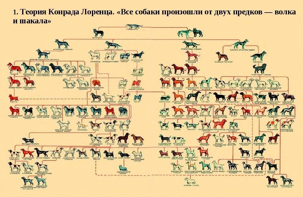 I. классификация по использованию.. происхождение собак и их породная классификация