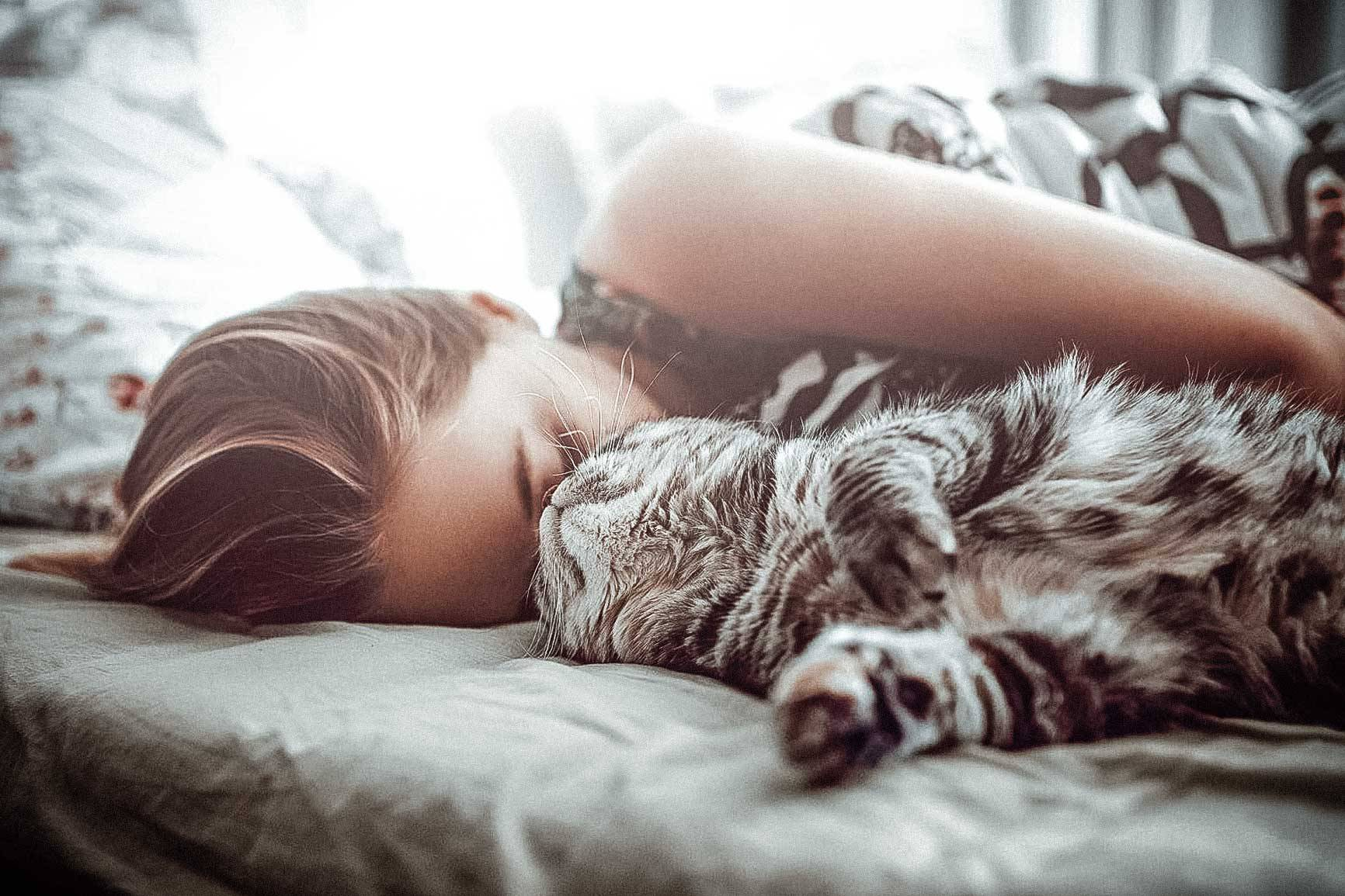Кот спит: сколько часов в сутки и почему возле хозяина