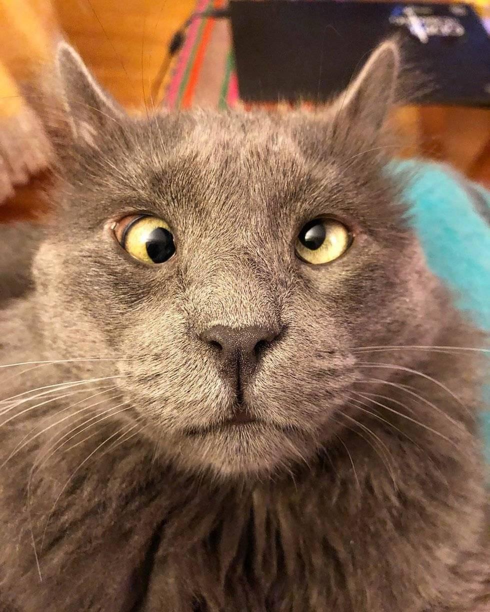 Очаровательный косоглазый кот по кличке беларус (фото)