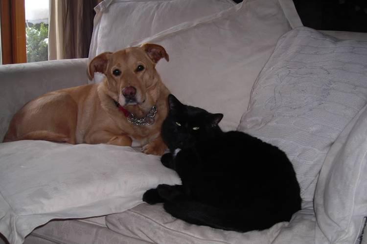 Две кошки в одном доме: как избежать конфликта?