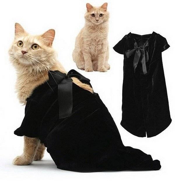Одежда для кошек: для чего нужна, как выбрать и как приучить кота к убранствам