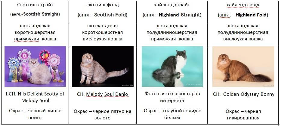 Как и какого выбрать котенка?