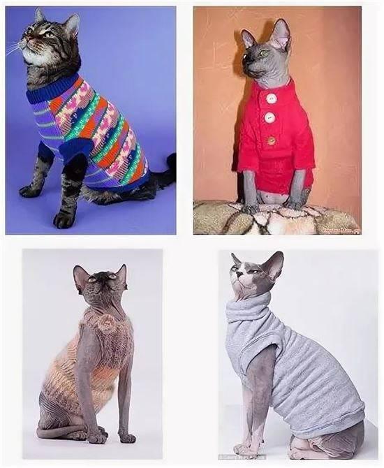Одежда для кошек своими руками: выкройки и пошаговая инструкция