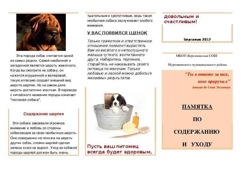 Как ухаживать за щенком: чем кормить, гигиенические процедуры