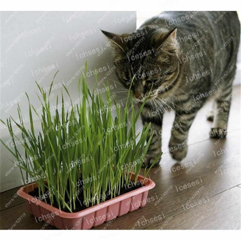 Кот не ест траву для кошек