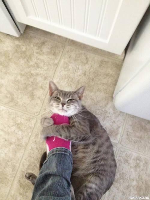 Интересное наблюдение: почему одни кошки встречают хозяина у двери, а другие нет