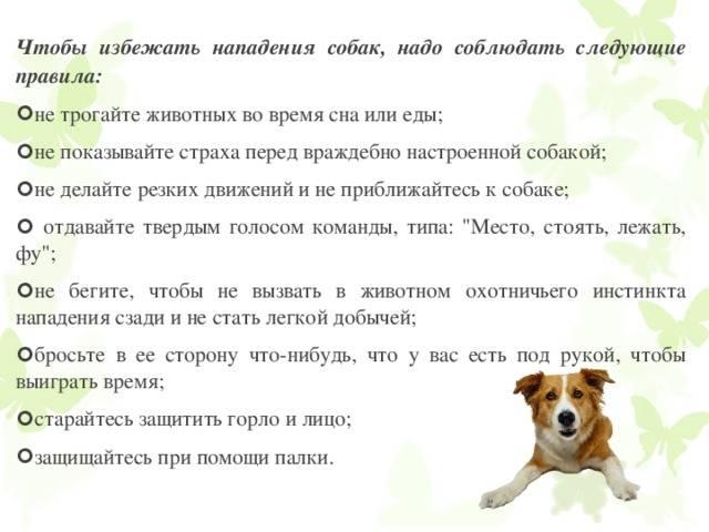 Как воспитывать собаку: спросим профессионалов. хотите вырастить питомца, за которого не стыдно?