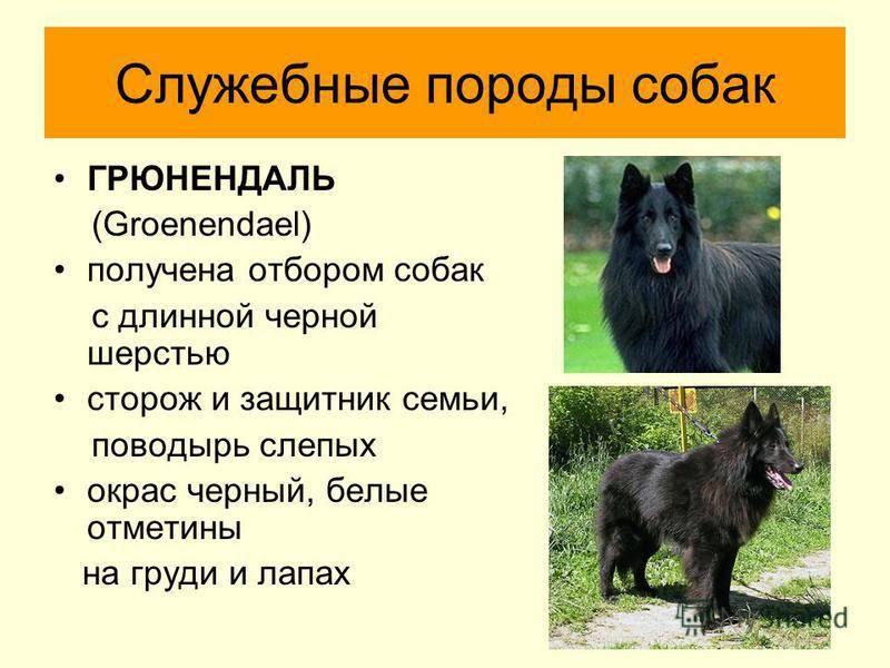 Служебные породы собак с фото