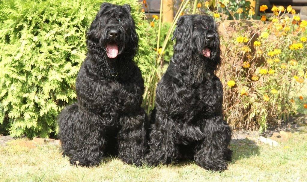 Русские породы собак: краткое описание