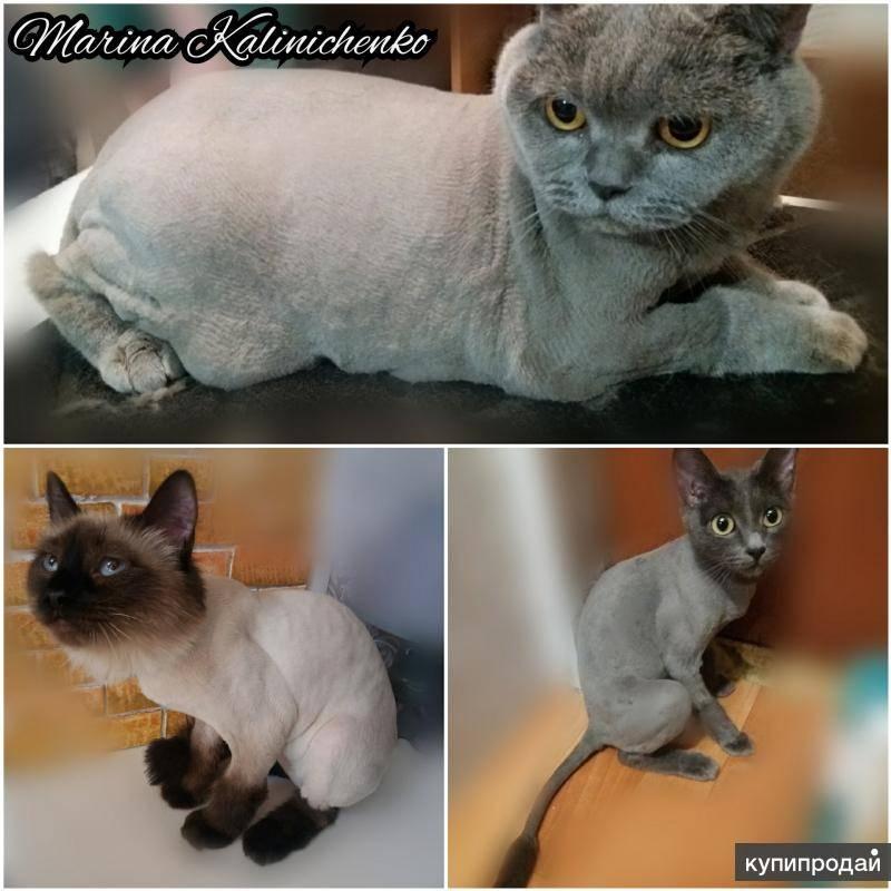 Груминг кошки на дому своими руками – что, как, зачем? советы +видео и фото