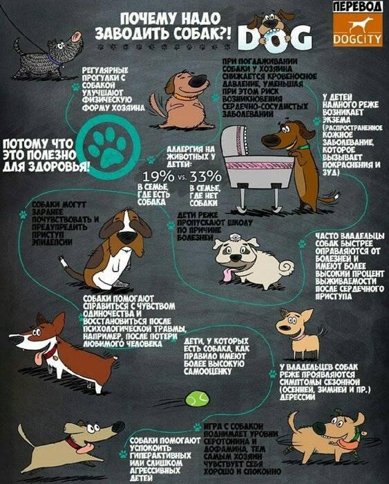 Собака - друг человека или верный слуга вожака стаи? | ветпрактика