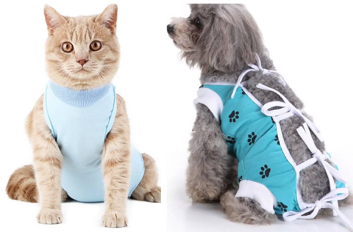 """Попоны для кошек: виды, выбор и использование   блог ветклиники """"беланта"""""""