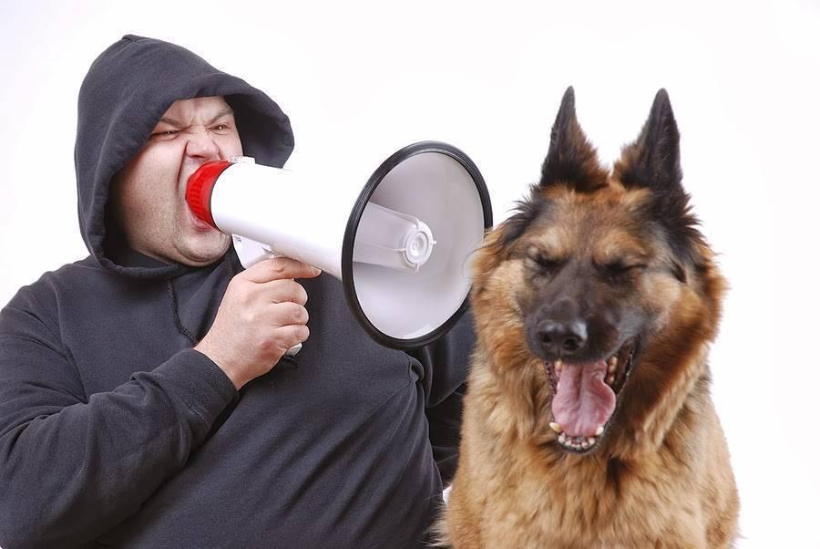Как приучить собаку к вольеру или будке: советы от опытных заводчиков
