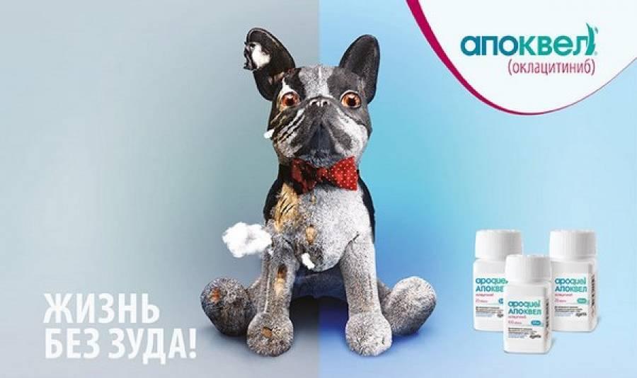 Апоквел для собак 16 мг 100 таблеток купить по выгодной цене на официальном сайте