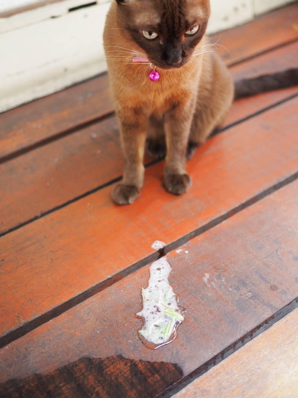 Пена изо рта у кошки или кота: причина и что делать   почему идет белая пена