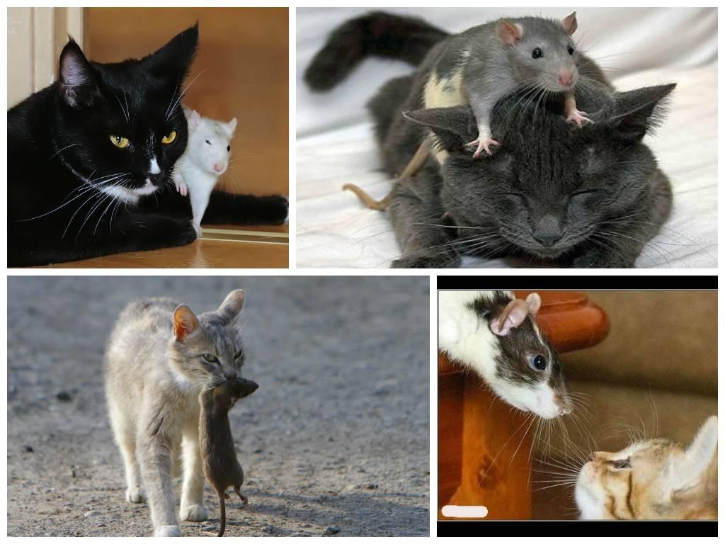 Собаки-крысоловы — обзор пород для охоты на грызунов с фото и названиями
