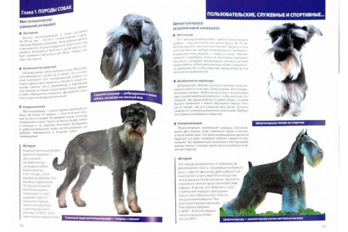 Содержание шнауцеров всех видов: описание породы, размеры, правила ухода и вид