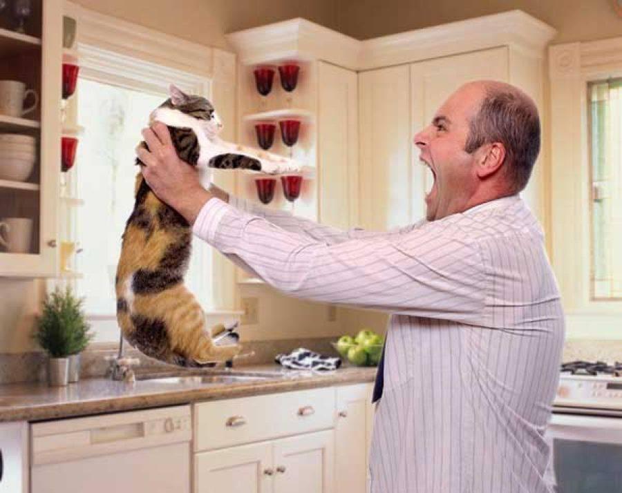 Как правильно наказывать кошку за плохое поведение: методы