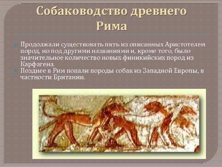 Какая порода собак считается самой древней: время появления животного