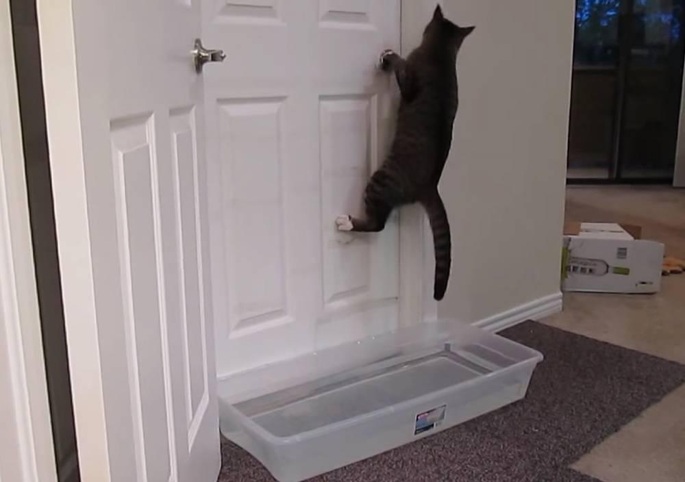 Дверь холодильника туго открывается — что делать? ваш вопрос — наш ответ!